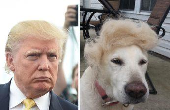 donald-trump-funny-look-alike-2__700