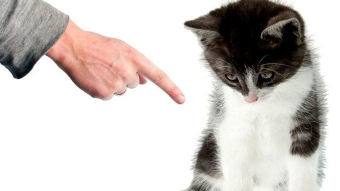 Come calmare un gatto agitato