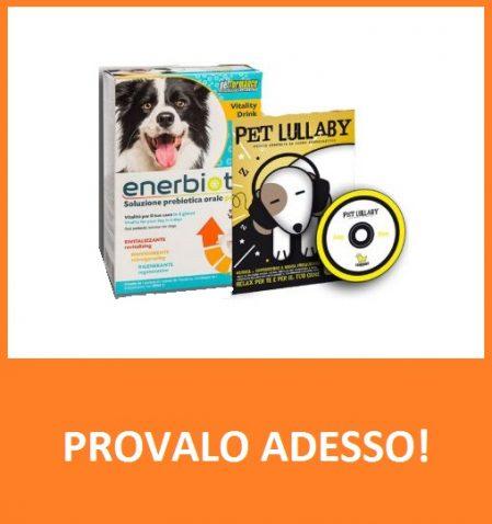 enerbbiotic dog