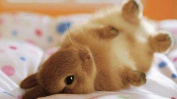 Come insegnare a un coniglio a non masticare i mobili