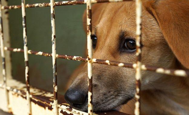 Lecce, maltrattamenti animali: lancia in aria cani e colpisce con mazza