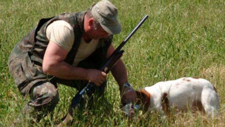Cacciatore fa uccidere i suoi quattro cani: denunciato