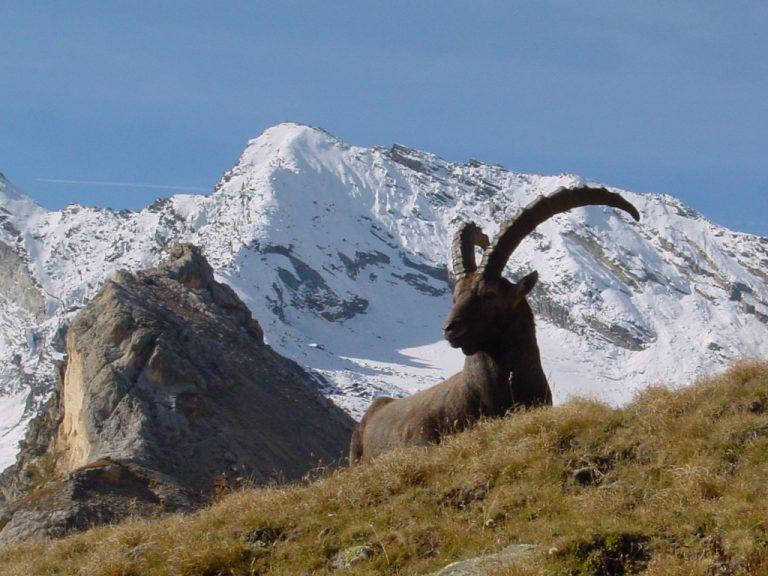 I pi bei paesaggi innevati di montagna in italia - Immagini da colorare delle montagne ...