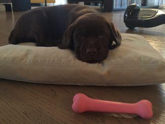 Linus: lo sfogo su Instagram per la morte della sua canina Bruna
