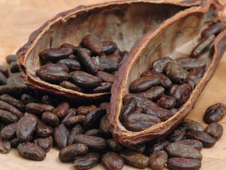 Semi di cacao: dove comprarli