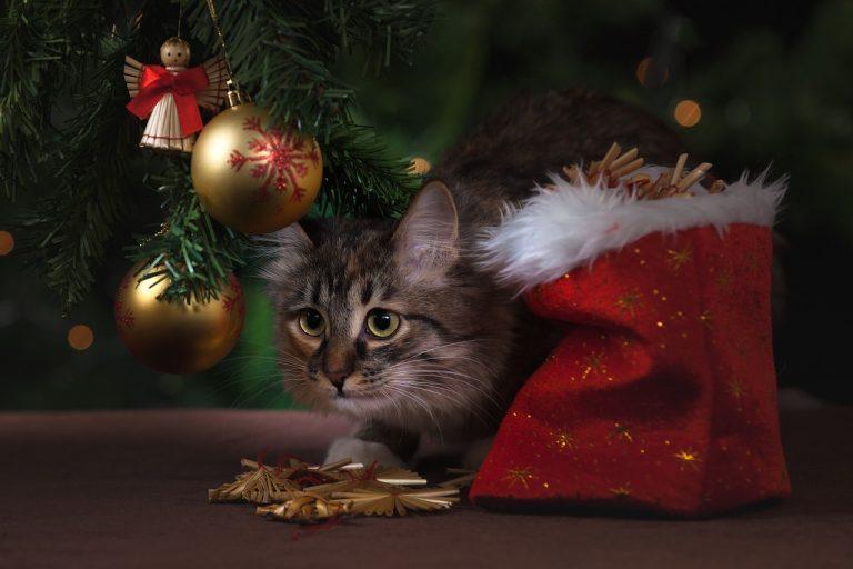 decorazioni e animali
