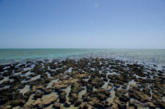Shark Bay (Australia)