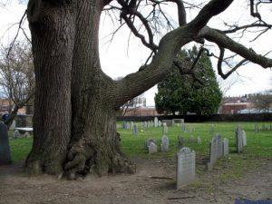 Albero dell'impiccagione e cimitero delle streghe