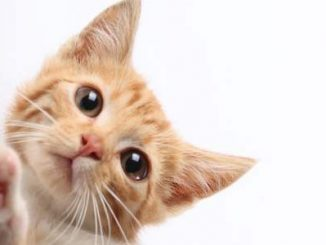 Gatti: foto divertenti dove distruggono oggetti in casa con atteggiamenti goffi