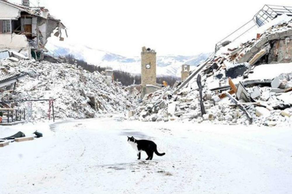 Terremoto centro italia le dichiarazioni del sindaco di for Scopa sul divano
