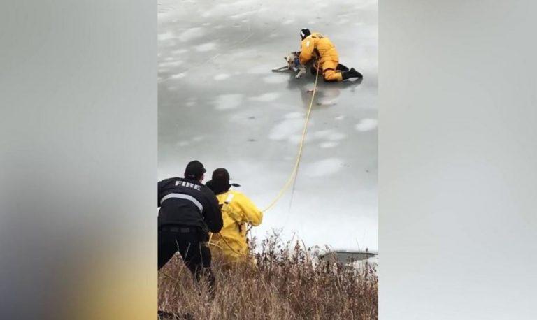 cane cade in un lago ghiacciato