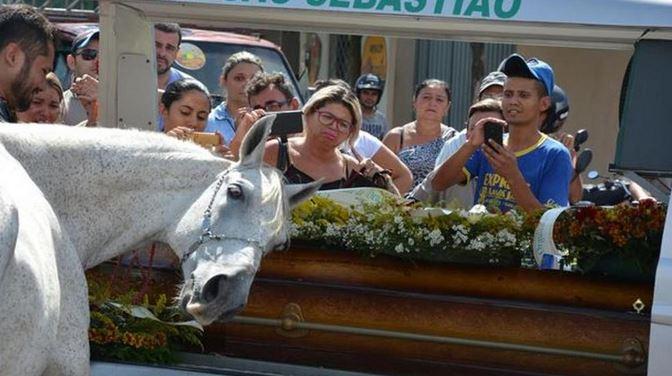 cavallo-piange
