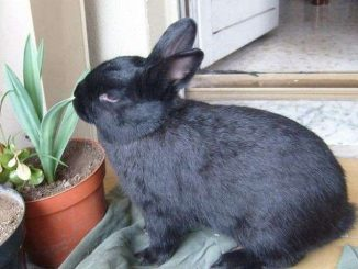 Come capire se i conigli vanno in letargo