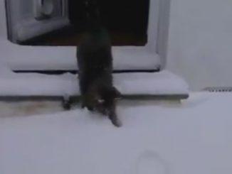 gatto scopre la neve