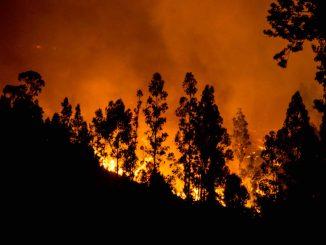 Un incendio a Vichuquen, 24 gennaio 2017 (MARTIN BERNETTI/AFP/Getty Images)