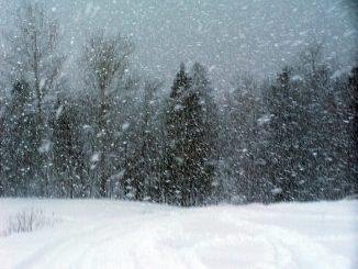 Terremoto: centinaia di animali rischiano la morte nella neve in centro italia. Arrivano i soccorsi
