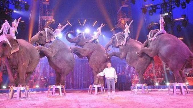 La triste vita di un elefante nato e cresciuto in gabbia. Il video schock
