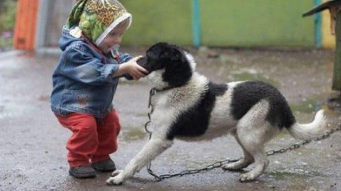 Potenza: giudice toglie due figli ad una coppia, li trascurano per i cani