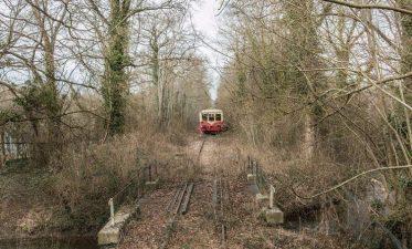 Treno abbandonato in un bosco