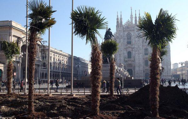 Milano, dopo le palme arrivano i banani. Scoppiano le polemiche
