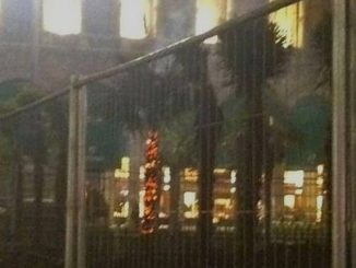 Palme bruciate a Milano: individuati i responsabili