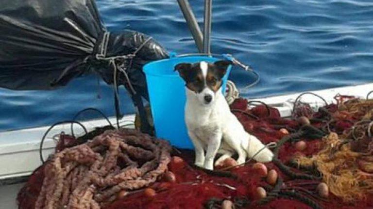 Sicilia: cane si getta tra le onde per evitare l'abbandono. Salvato dai pescatori