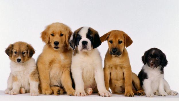 Come introdurre un nuovo cucciolo di cane in famiglia se ne avete già altri