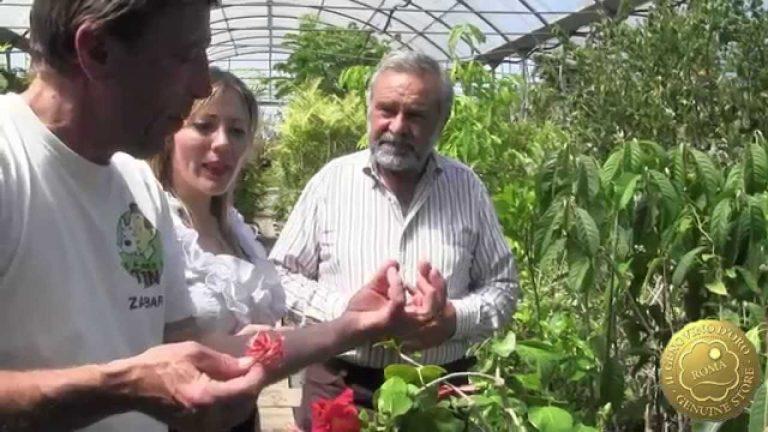 Cosa preparare con la frutta esotica