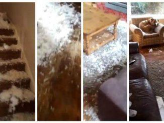 Rottweiler si sente solo e cosparge la casa con le piume dei cuscini: il video
