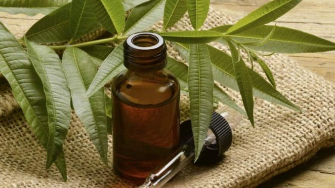 Tea tree oil: benefici