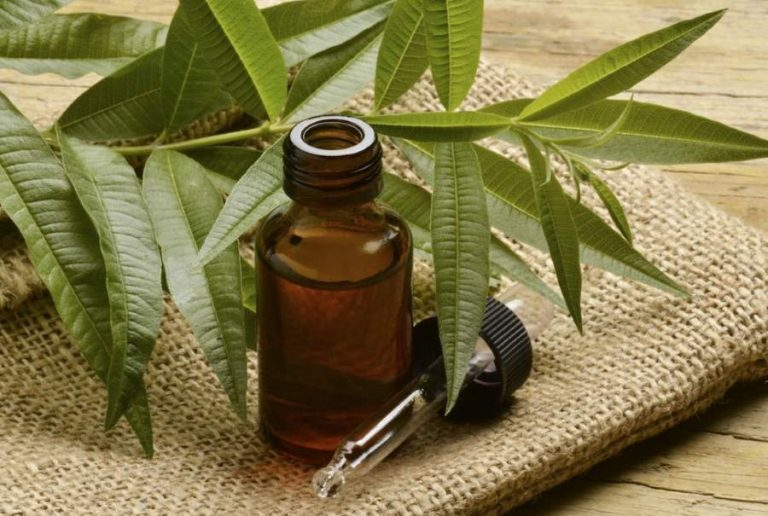 Tea tree oil: benefici
