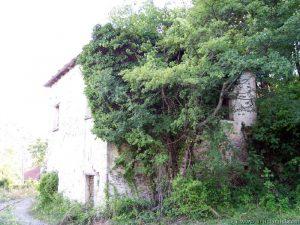 """Altra casa in rovina di Bozzi con la vegetazione """"rampicante"""""""