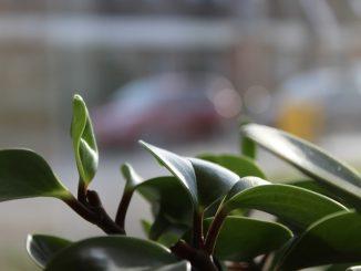 Come decorare il vostro appartamento con le piante