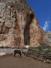 Particolare della grotta con un asino