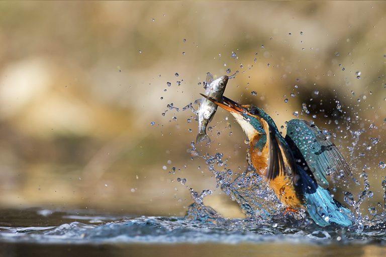 Fotografia naturalistica: cos'è, strumentazione e tecniche per realizzarla