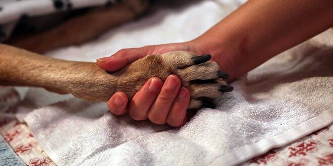 Per gli animali esiste l'eutanasia?