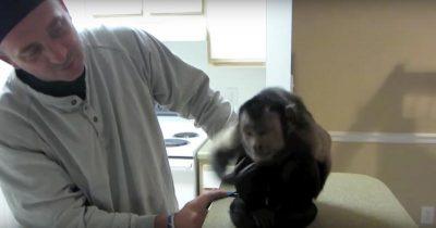 Scimmia1
