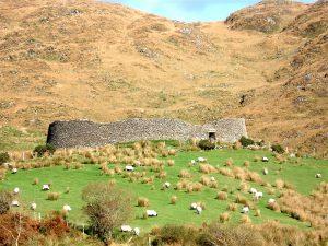 Staigue Fort con davanti pecore al pascolo