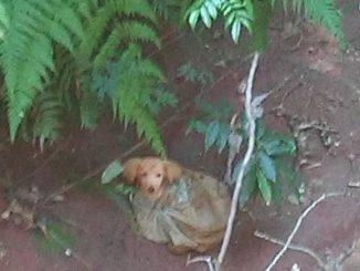Salva cagnolino dal sacchetto di plastica grazie a Facebook
