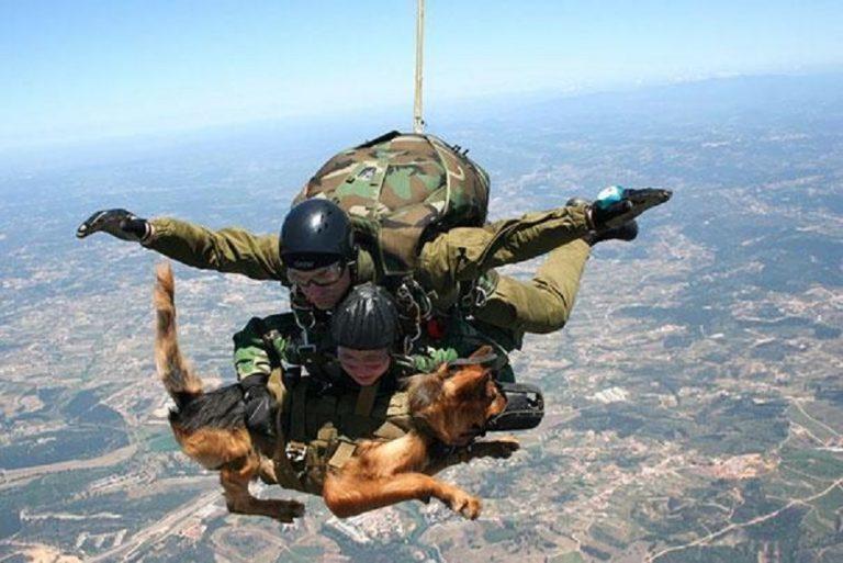 11 cani militari eroi ricevono una medaglia al coraggio