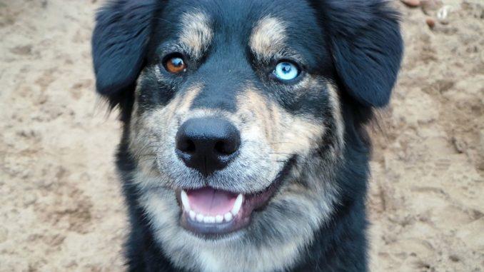 Cane trascorre 18 mesi in canile. Nessuno lo vuole per colpa della sua rara condizione