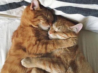 Due gatti vengono salvati insieme da una brutta sorte e diventano inseparabili