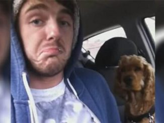 Cane preoccupato dalla guida del padrone in macchina