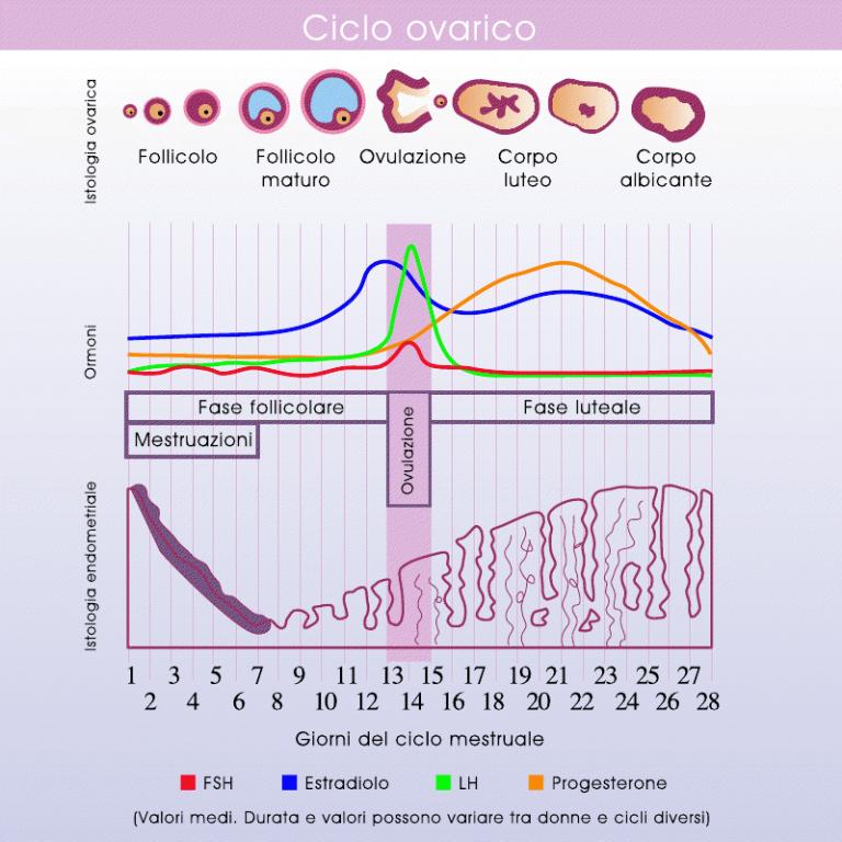 Calendario Mestruale Giorni Fertili.Qual E Il Periodo Migliore Per Rimanere Incinta