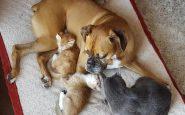 Cane attaccato dai gattini che lo riempiono di baci