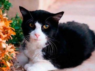Famiglia adotta gatto di 20 anni che li ripaga così