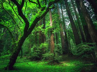 legno foresta amazzonica