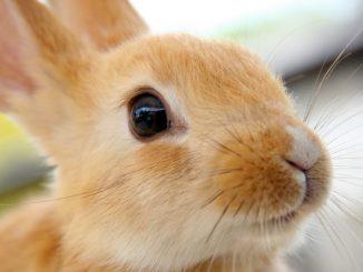 Animal Equality ha appena annunciato un avvenimento storico: il Parlamento Europeo è dalla parte dei conigli! Voto storico che può cambiare molte cose.