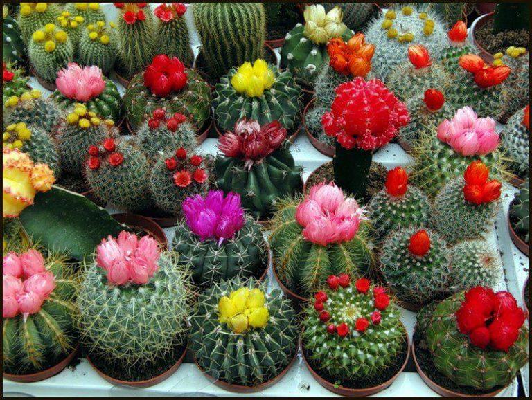 piante grasse da esterno perenni