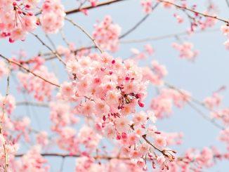 Frasi sulla primavera italiane e inglesi